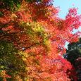 名古屋の紅葉4