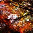 名古屋の紅葉5