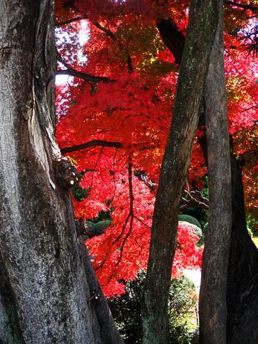 名古屋の紅葉1