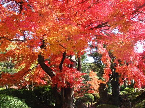 名古屋の紅葉2