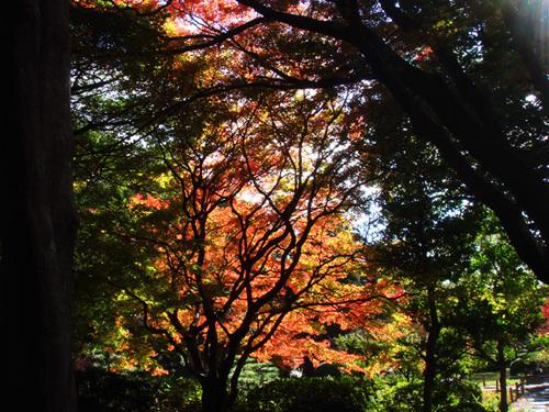 名古屋の紅葉3